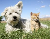 photo of dog and cat to show example of an asthma trigger